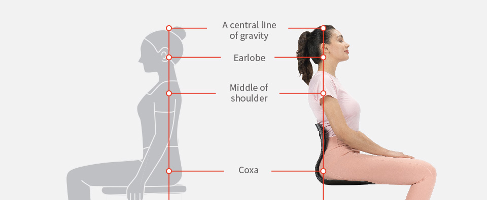 A central line of gravity, Earlobe, Middle of shoulder, Coxa